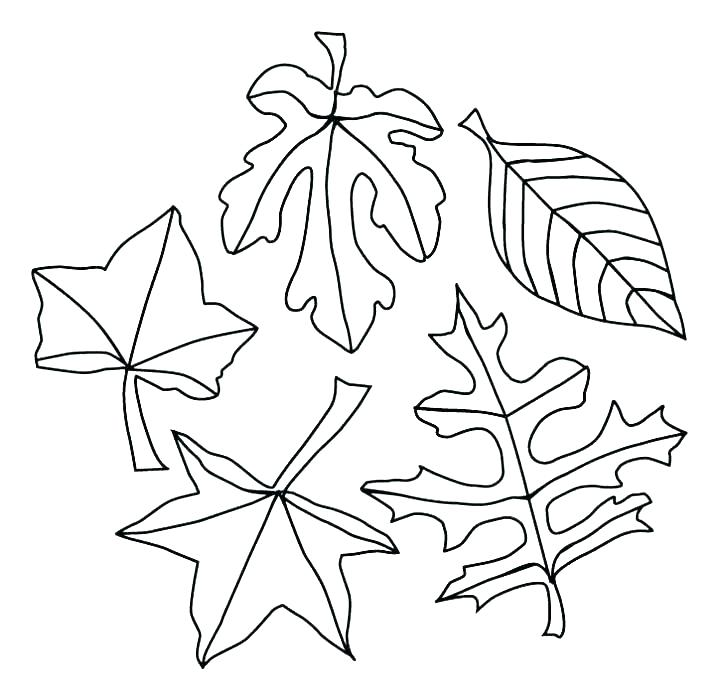 720x699 Coloring Pages Of Trees Plants And Flowers