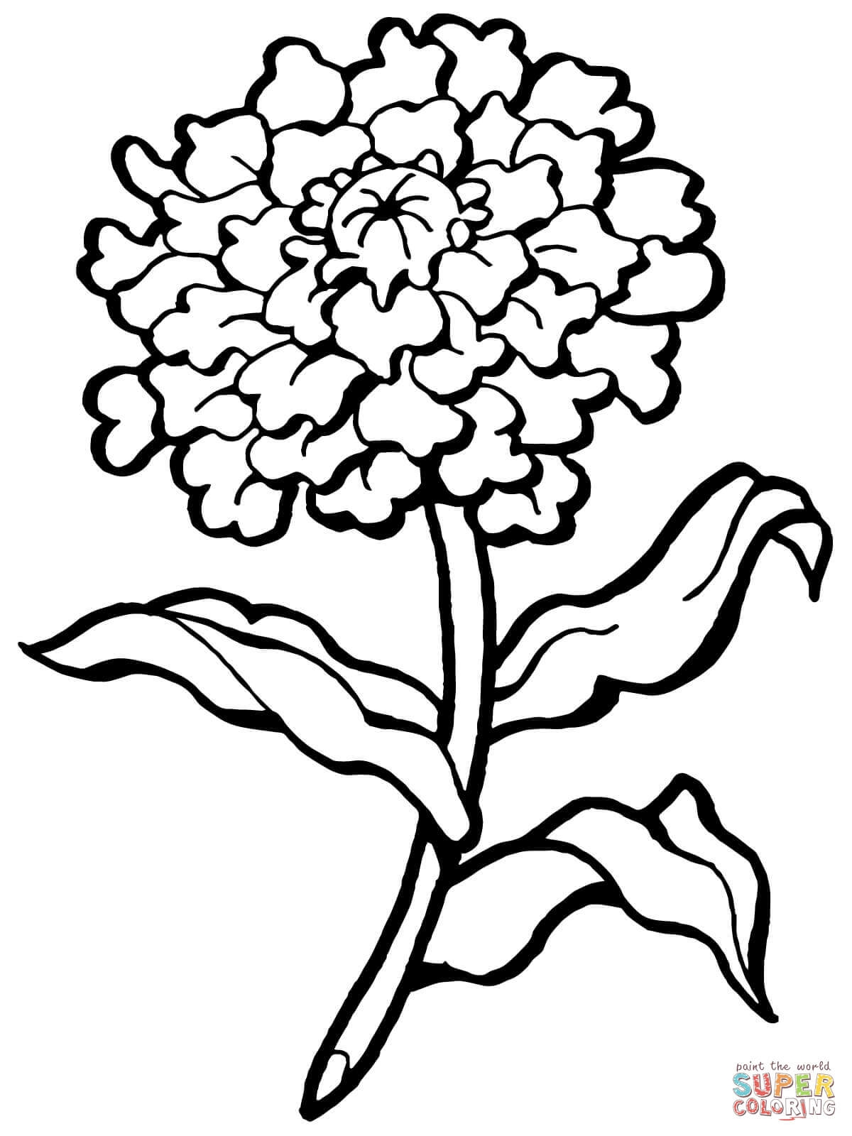 1200x1600 Awesome Carnation Coloring Pages Design Printable Coloring Sheet