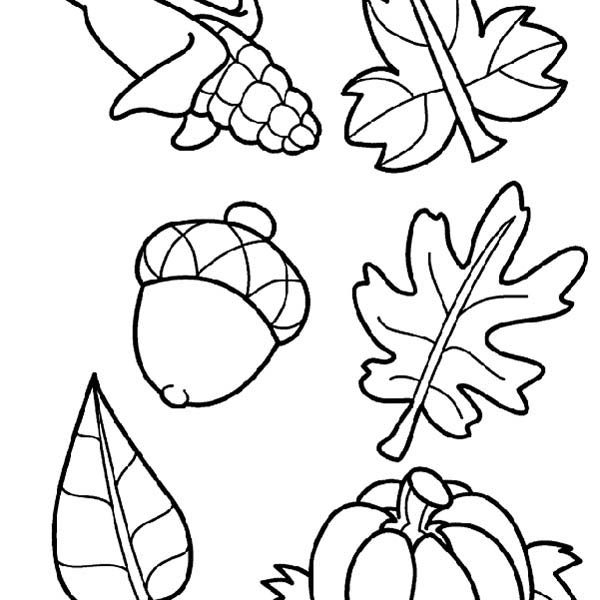 600x600 Fall Harvest Coloring Pictures Free Coloring Page
