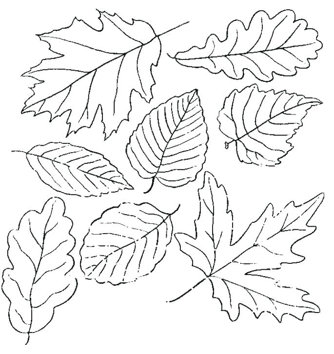 Fall Leaves Clip Art Coloring Pages