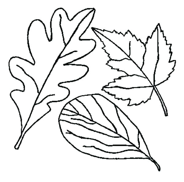 600x593 Fall Leaves Coloring Page Fall Leaf Color Cut And Paste Or Stencil