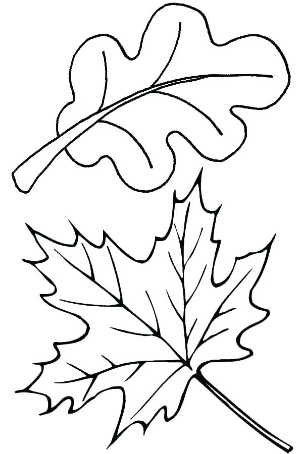 600x900 Leaf Color Pages Medium Size Of Leaves Coloring Pages Fall Leaf