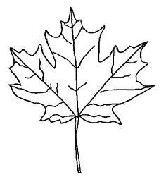 236x261 Leaf Outline Clip Art