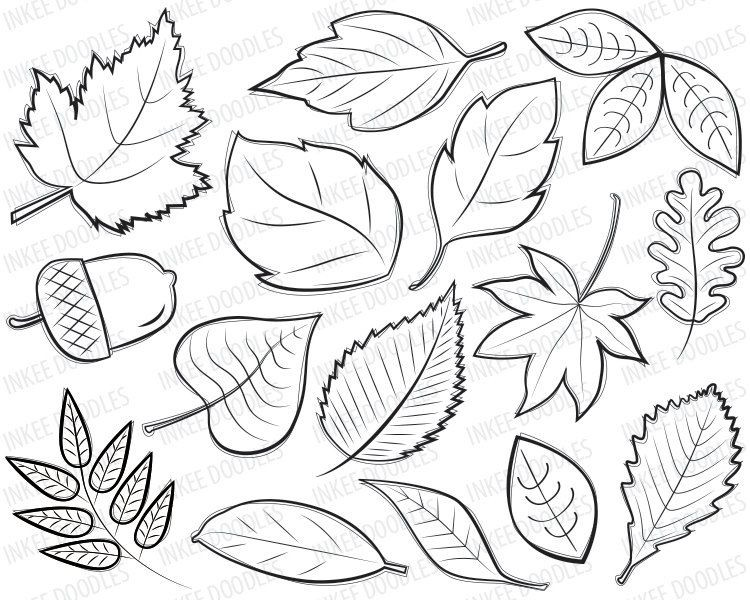 750x600 Autumn Leaves Coloring Pages For Thankful Tree