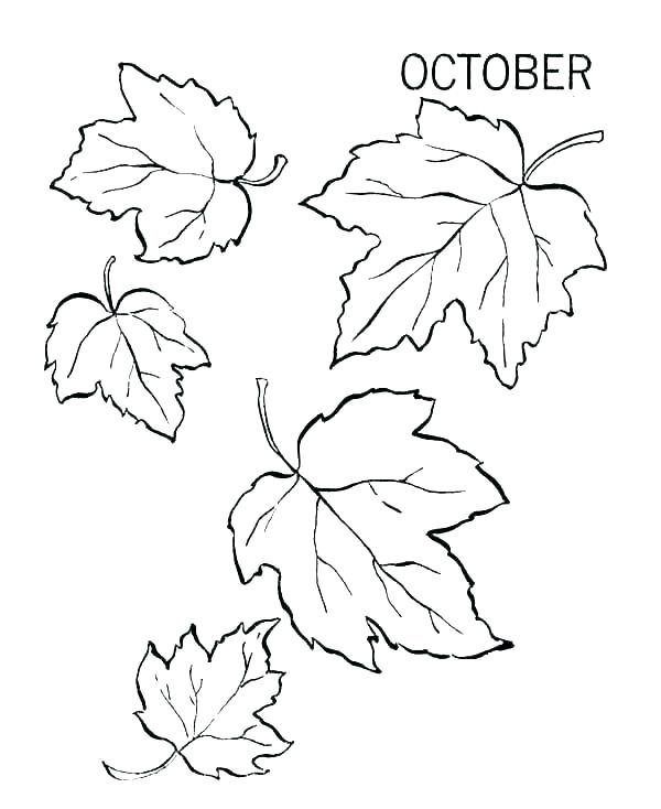 600x734 Fall Leaf Coloring Pages Printable Leaves Coloring Pages Leaf