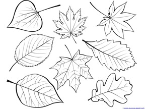 288x216 Fall Leaves And Trees Coloring Printables