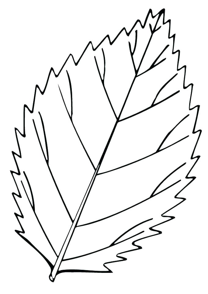 680x960 Free Leaf Coloring Pictures Autumn Coloring Pages Images Fall Leaf