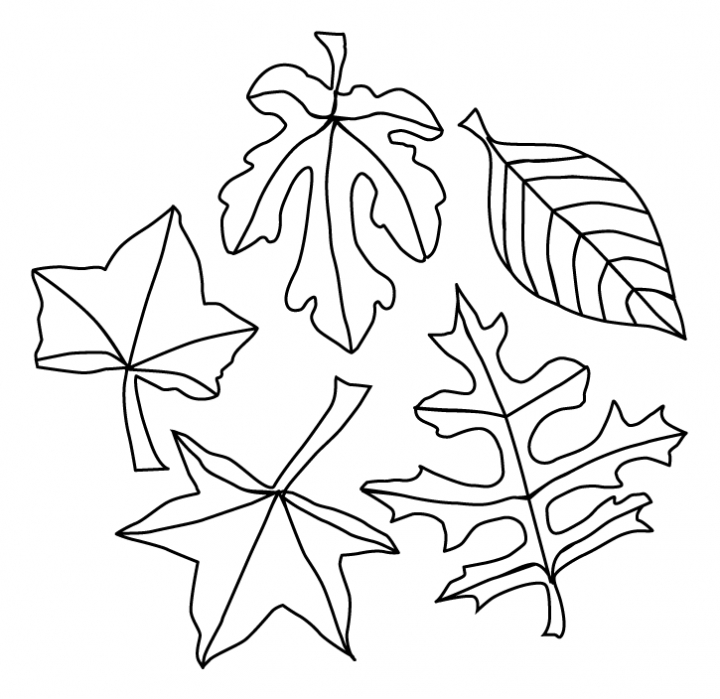 720x699 Leaves Coloring Pages