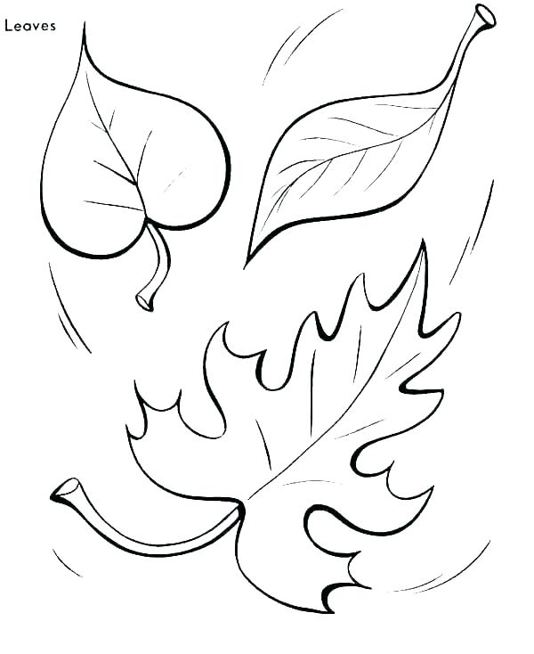 600x734 Leaves Coloring Pages Coloring Pages Of Leaves Autumn Leaf