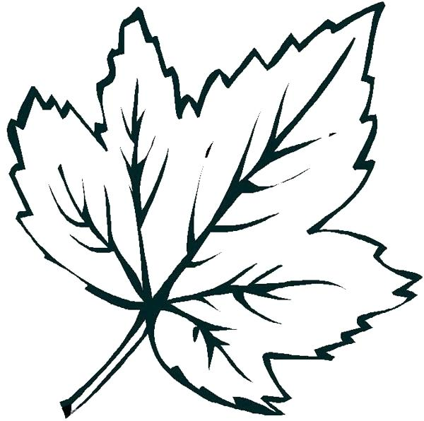 600x596 Leaves Coloring Pages Leaf Coloring Page Printable Coloring