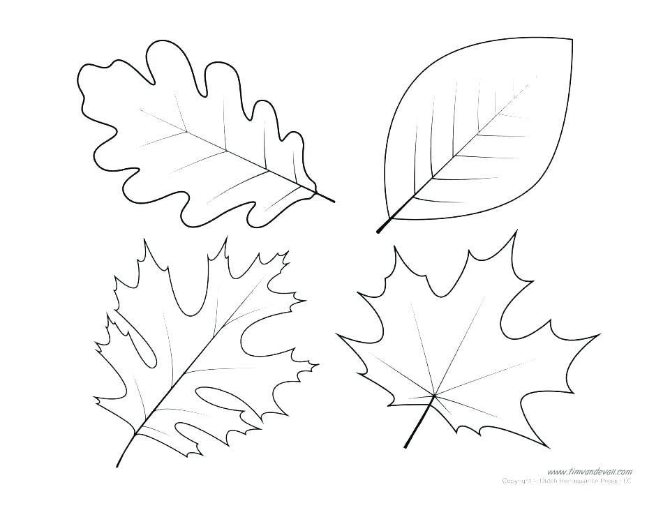 960x741 Printable Fall Leaf Stencils Autumn Leaves Coloring Pages Autumn