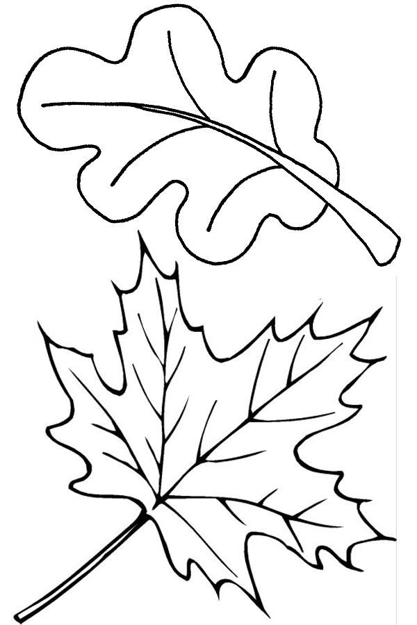 600x900 Two Fall Leaves Coloring Page