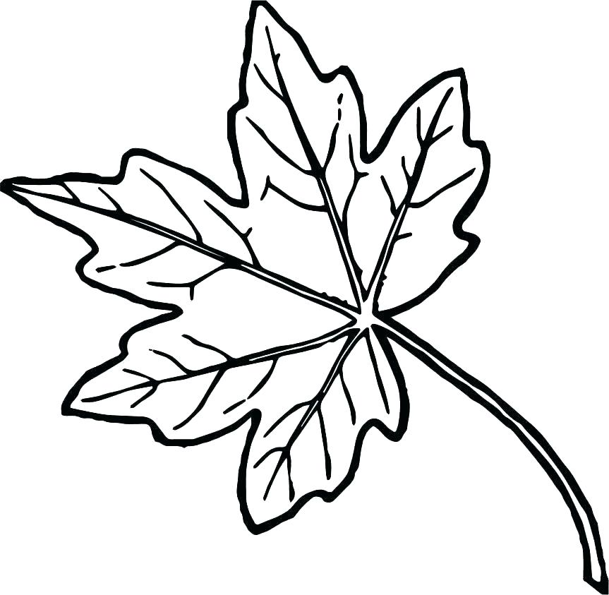 863x843 Leaves Coloring Pages Printable Deepart