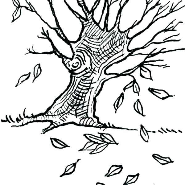 600x600 Coloring Page Of Leaves Coloring Pages Of Trees Without Leaves