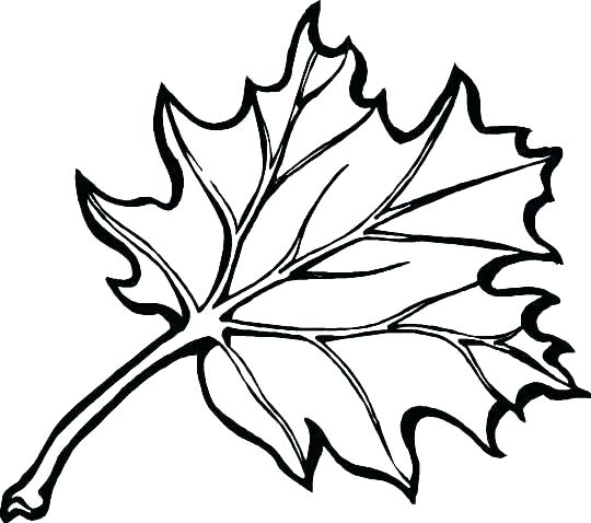 540x478 Coloring Pages Of Leaves Fall Leaves Coloring Pages Leaf Coloring