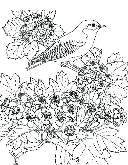 518x665 Fall Scenery Coloring Pages