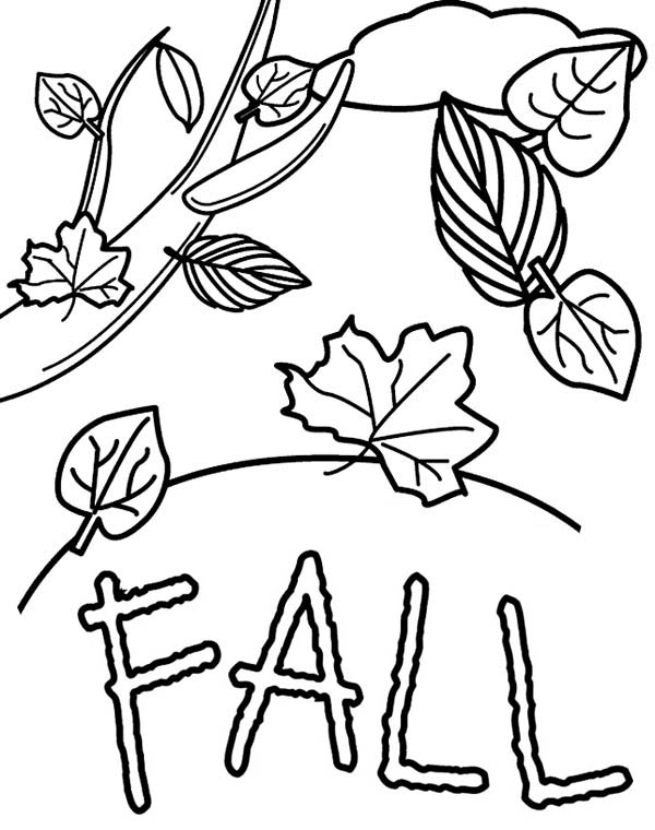600x760 Fall Leaves In Autumn Season Coloring Page Color Luna