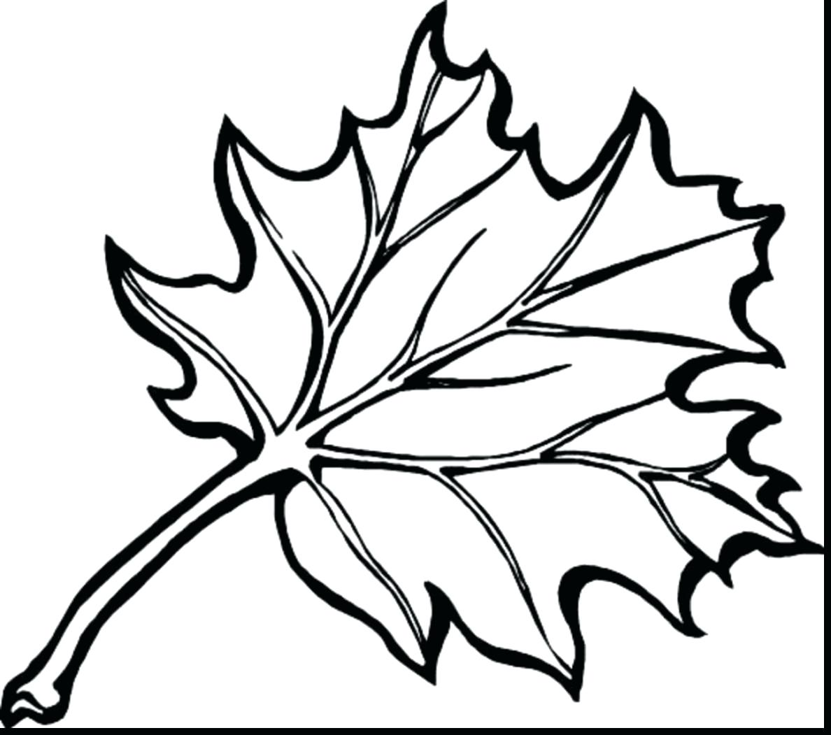 1188x1051 Launching Colouring Pictures Of Leaves Fall Season Coloring Pages