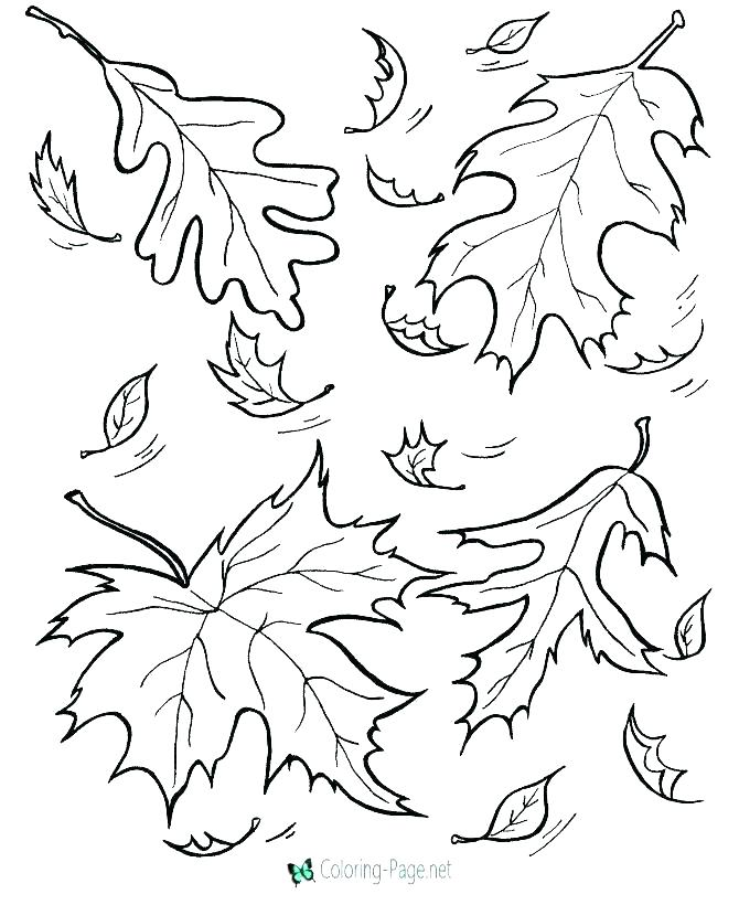 670x820 Coloring Pages Autumn Leaves Leaf Stencils Printable Fall Page