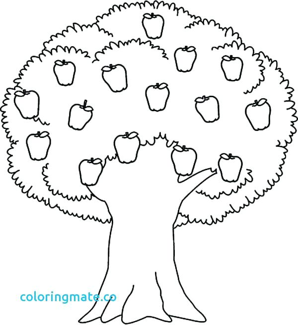 600x655 Apple Tree Coloring Page Fall Trees Coloring Pages Tree Printable
