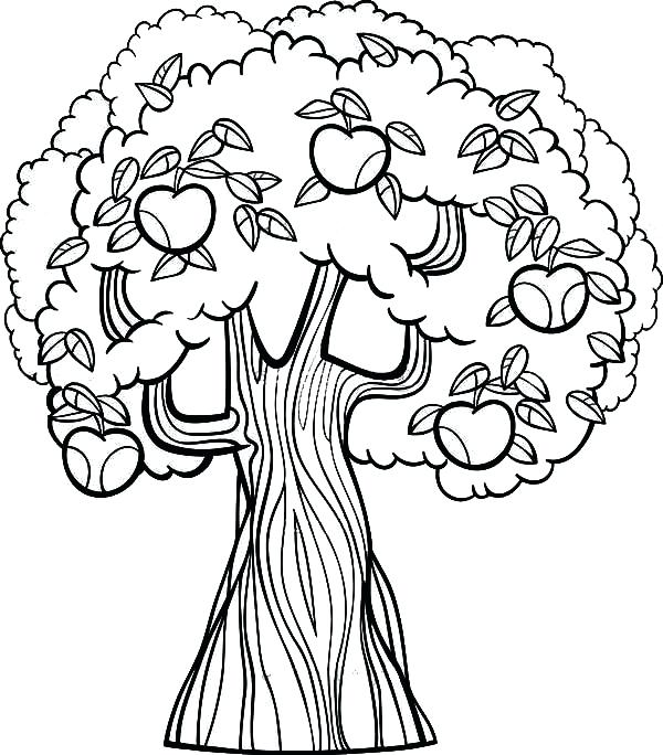 600x684 Fall Tree Coloring Page Fall Apple Tree Coloring Pages Fall Tree