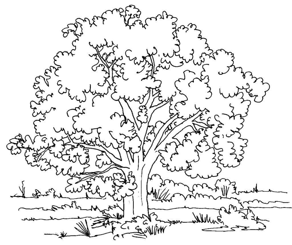1024x862 Fall Tree Coloring Page Pages For Trees New Peaceful Ideas Free