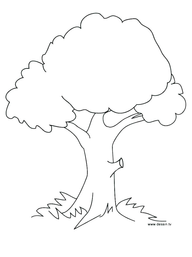 728x971 Printable Tree Coloring Pages Fall Tree Coloring Page Free