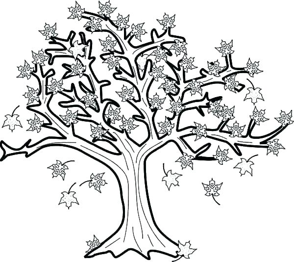 600x534 Fall Tree Coloring Pages
