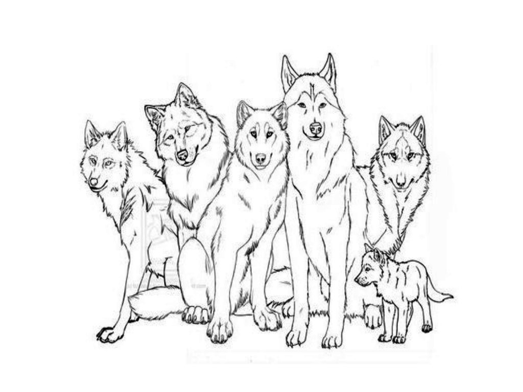 1024x768 Popular Wolf Family Coloring Page Realistic Pages Free Printable