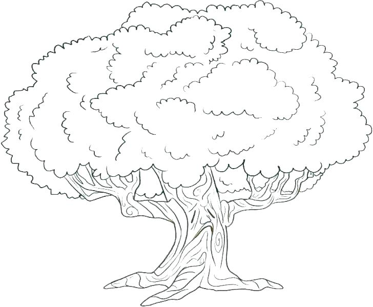 728x599 Coloring Pages Of Tree Frogs Coloring Pages Tree Free Tree