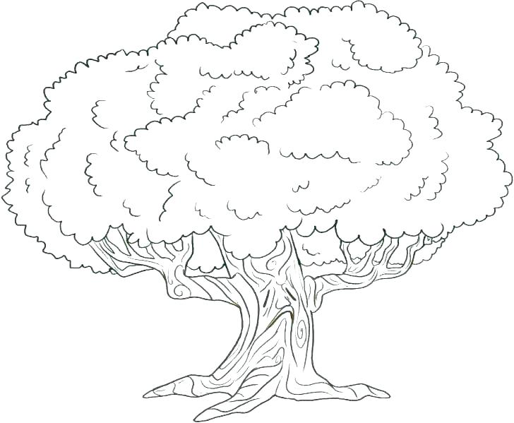 728x599 Jesse Tree Coloring Pages Tree Coloring Pages Home Improvement