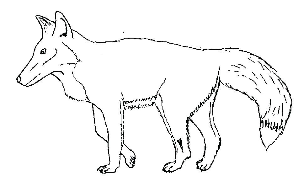 950x561 Fox Colouring Images Fox Coloring Page Fantastic Mr Fox Colouring