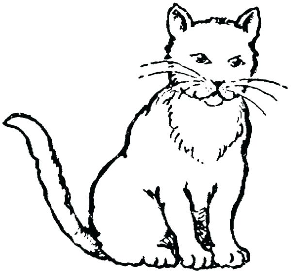 600x564 Coloring Pages Cats Together With Cat Color Pages Printable Dog