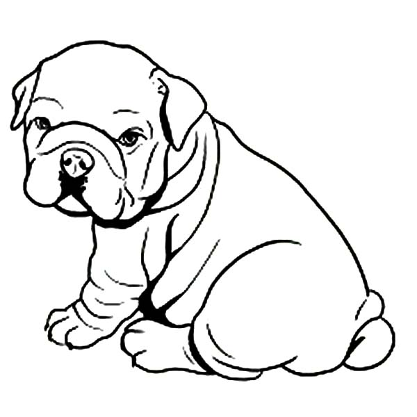 600x600 Fat Bulldog Like Towel Coloring Pages Dog Coloring Pages