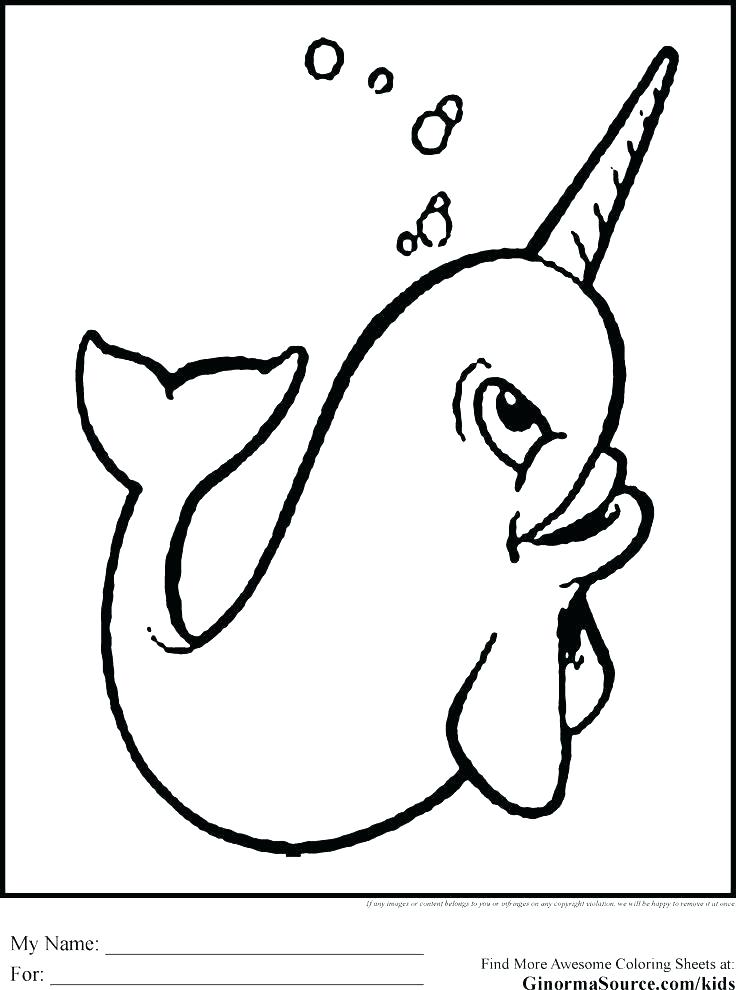 736x990 Narwhal Coloring Page Unicorn Horn Coloring Page Together