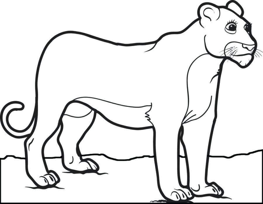 900x700 Female Lion Coloring Pages For Children Animal Pictures