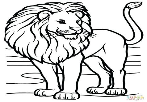 476x333 African Lion Coloring Page Coloring Trend Medium Size Male