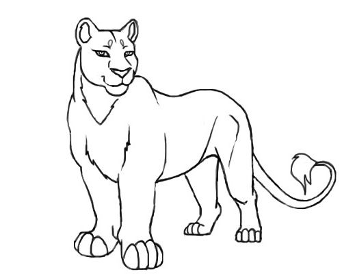 519x400 Female Lion Coloring Page Kids Coloring Pages