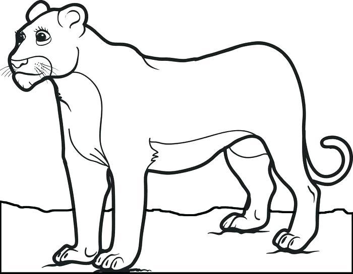 700x545 Lion Color Page Coloring Pages Of Lions Female Lion Coloring