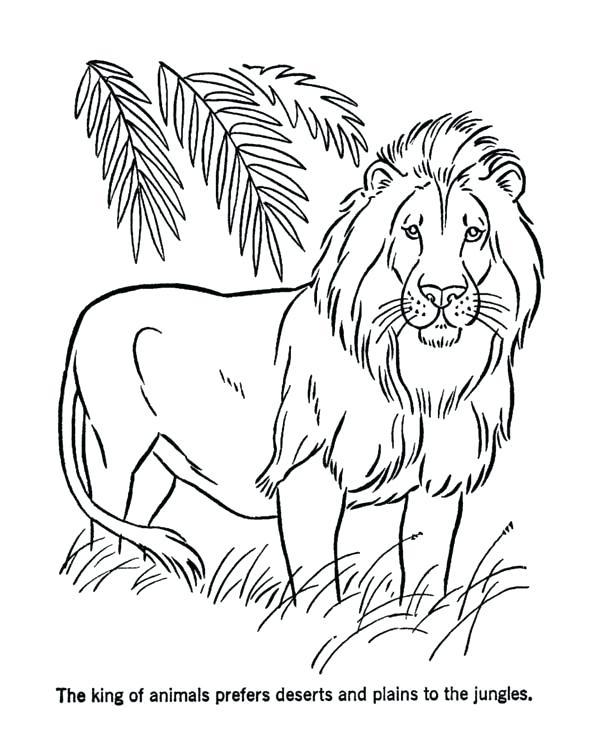 600x734 Lion Color Page Coloring Pages Of Lions Lion Color Pages Lion