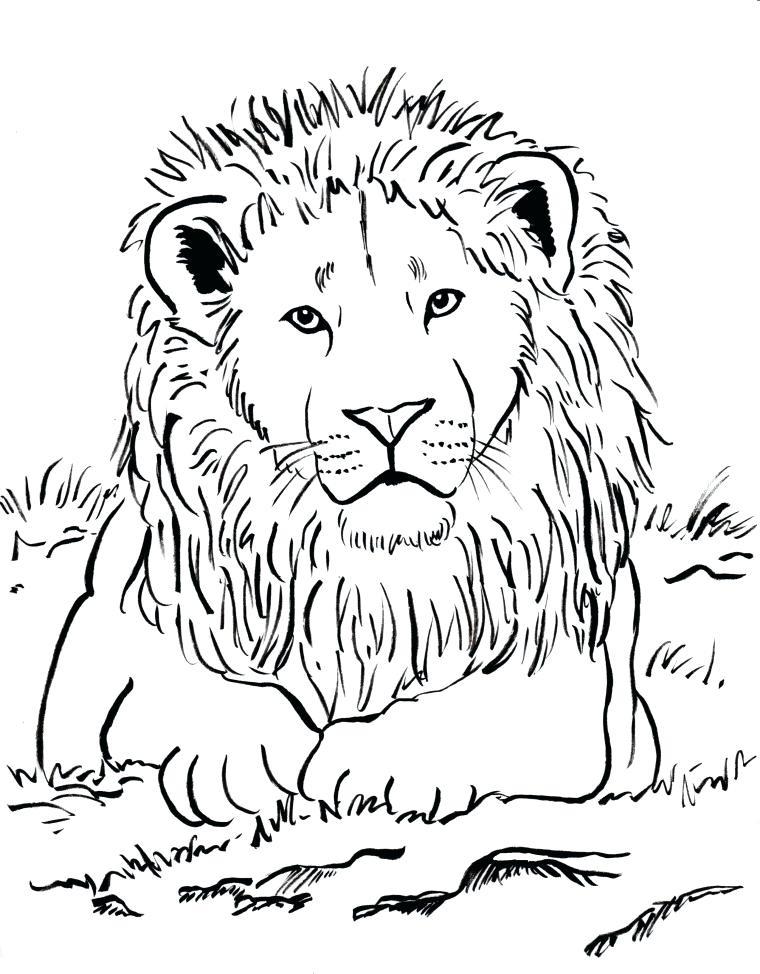 760x974 Lion Coloring Pages Lion Coloring Page Lion Coloring Sheets