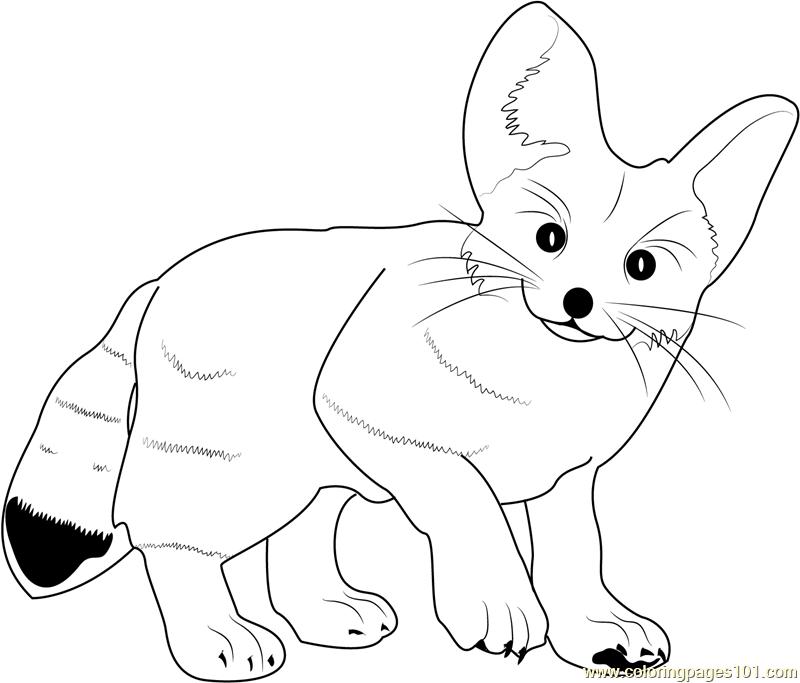 800x683 Fennec Fox Coloring Page