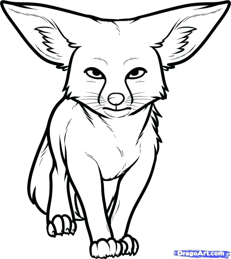 800x896 Fennec Fox Coloring Page Adult Desert Animals G Pages Fox Page