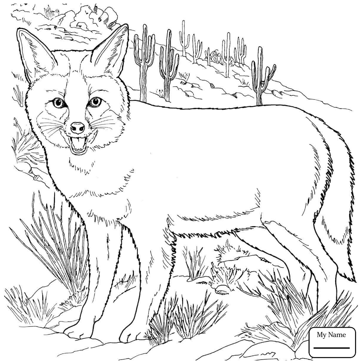 1224x1232 Genuine Fennec Fox Coloring Page Drawing At Getdrawings Com Free