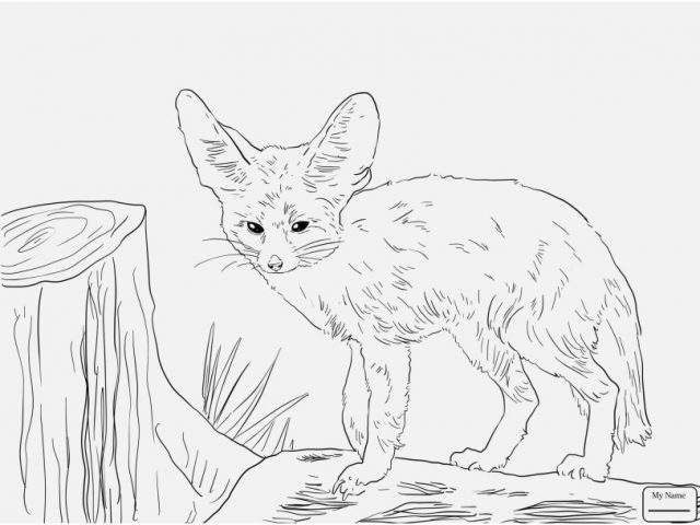 640x480 Realistic Fox Coloring Pages Design Mammals Fennec Fox Foxes