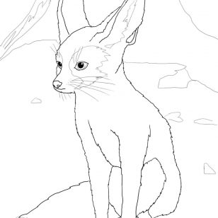 308x308 Simple Fennec Fox Coloring Pages