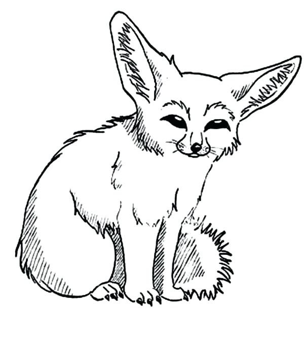 600x671 Baby Fennec Fox Coloring Pages Image