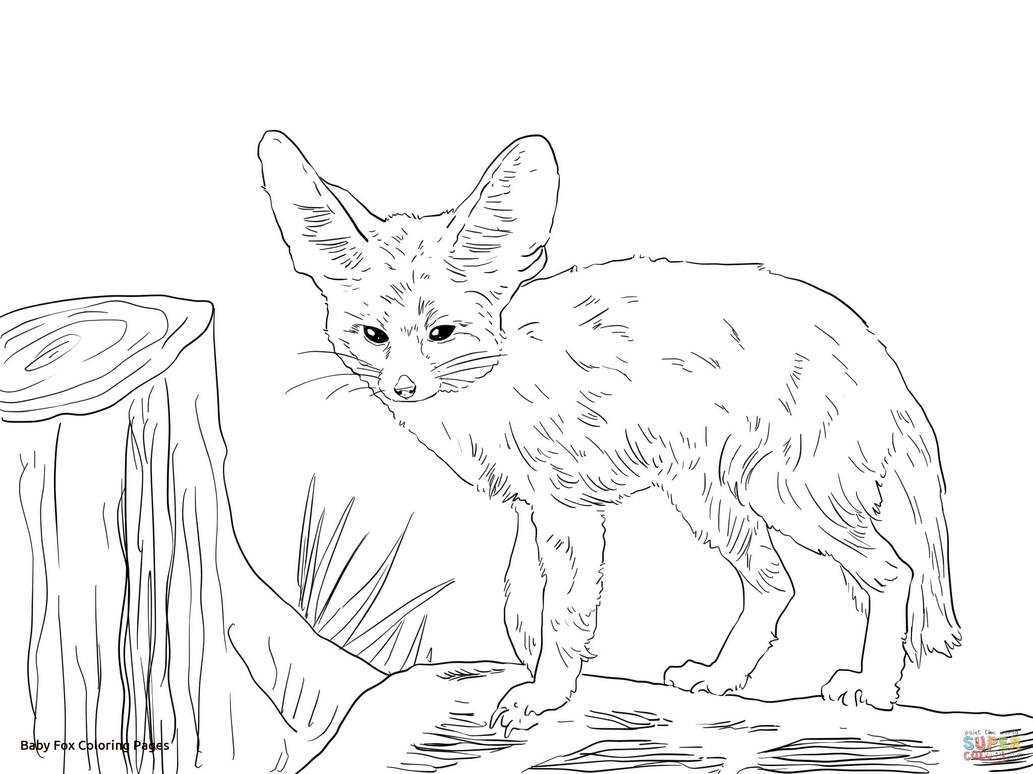2048x1536 Baby Fox Coloring Pages