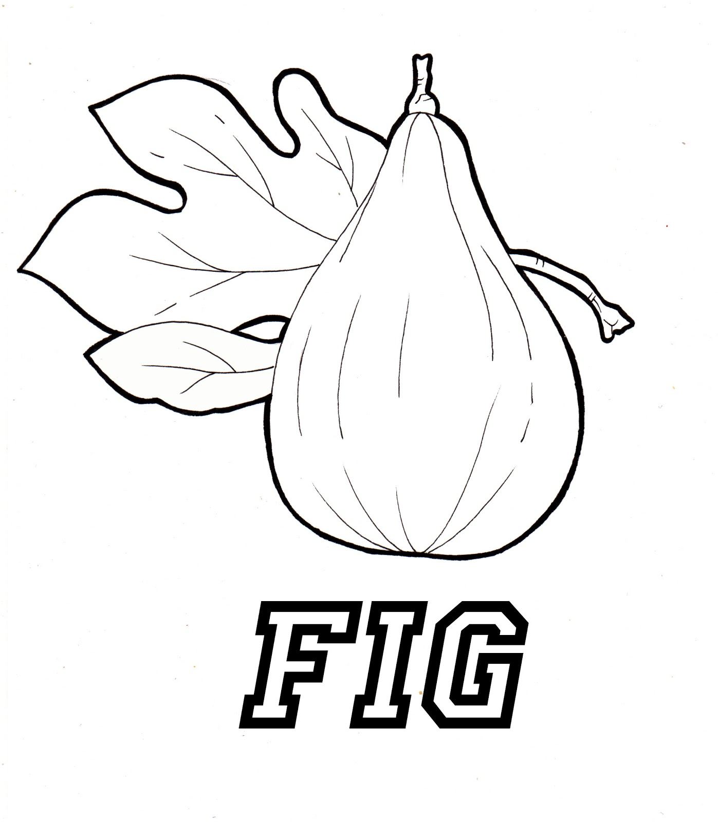 Fig Coloring Page at GetDrawings.com | Free for personal use ...
