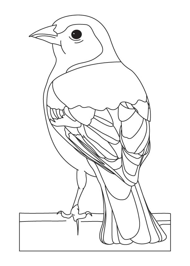 613x860 Common Chaffinch Coloring Page Bird Printables